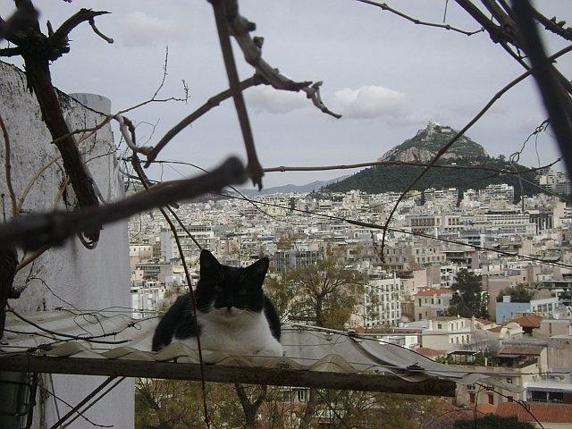 Athens: Anafiotika kitty looking at Lykavittos Hill