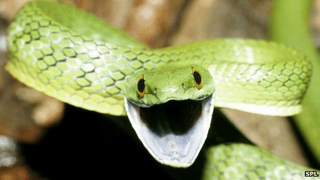 Snake venom may be 'drug source'