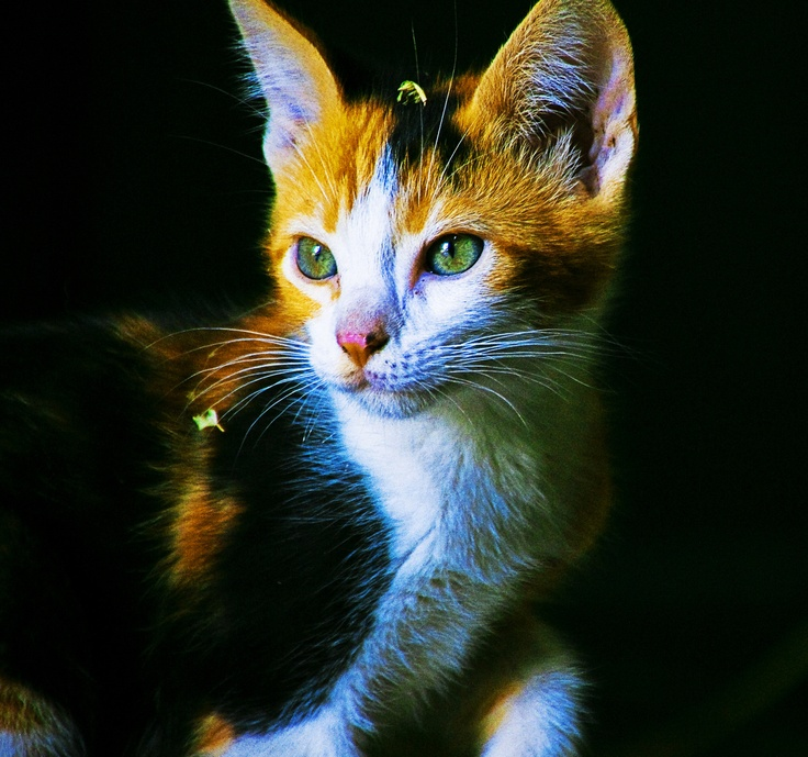 My Cat Paolo Repinned By All Creatures Gift Shop Beautiful Gorgeous Cats Pretty Cats Baby Cats