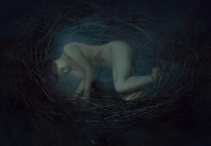 © Sergey Spoyalov -    Nest https://500px.com/Spoyalov