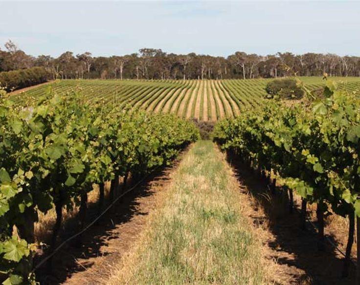 An indulgent taste of Perth and Margaret River, taking in Fremantle, Kings Park, Dunsborough, Yallingup, Bunker Bay, premium Margaret River wineries.