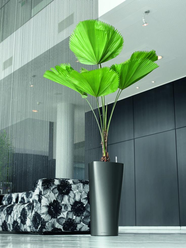 20 besten lechuza bilder auf pinterest schleiereulen becher und b ropflanzen. Black Bedroom Furniture Sets. Home Design Ideas