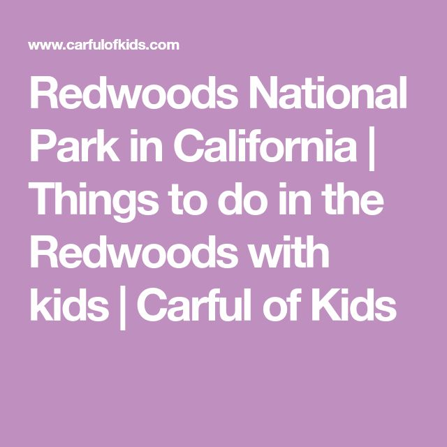 Redwoods National Park in California | Things to do in the Redwoods with kids | Carful of Kids