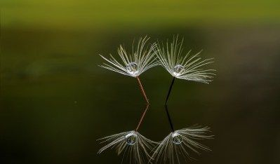 Photo by ibangfotografi  dandelion reflections.  What are double numbers telling you?