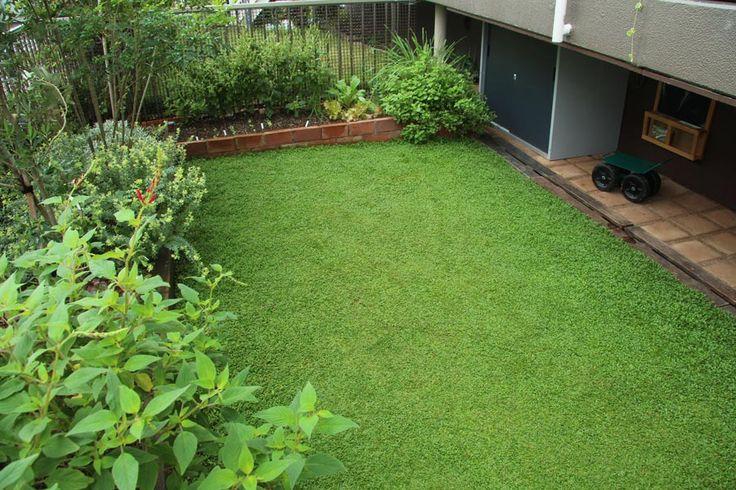 雑草の生える隙間がない♡クラピア<1>芝生に代わる新しいグランドカバーの魅力! | クラピア大好き