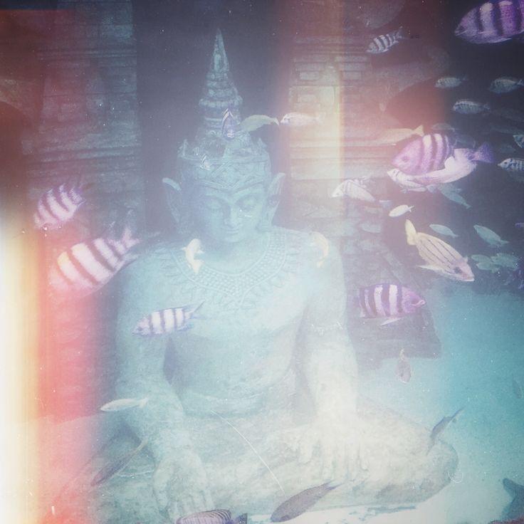 Rocco & patrick Salvadori   Underwater statue
