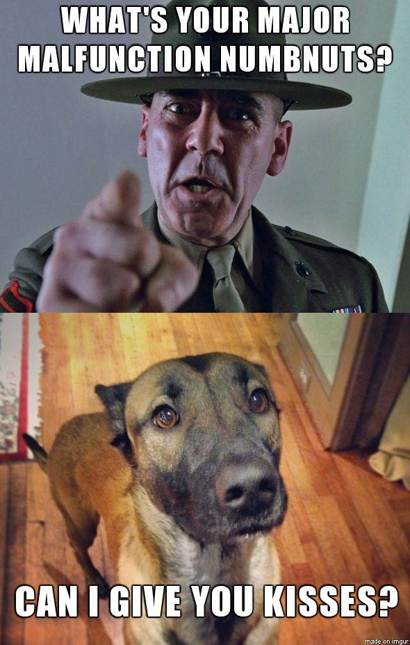 344308e1c22920224a7786285d90059d military training training programs 57 best malinois memes images on pinterest german shepherd