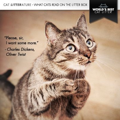 cat kitten pleading quote charles dickens oliver