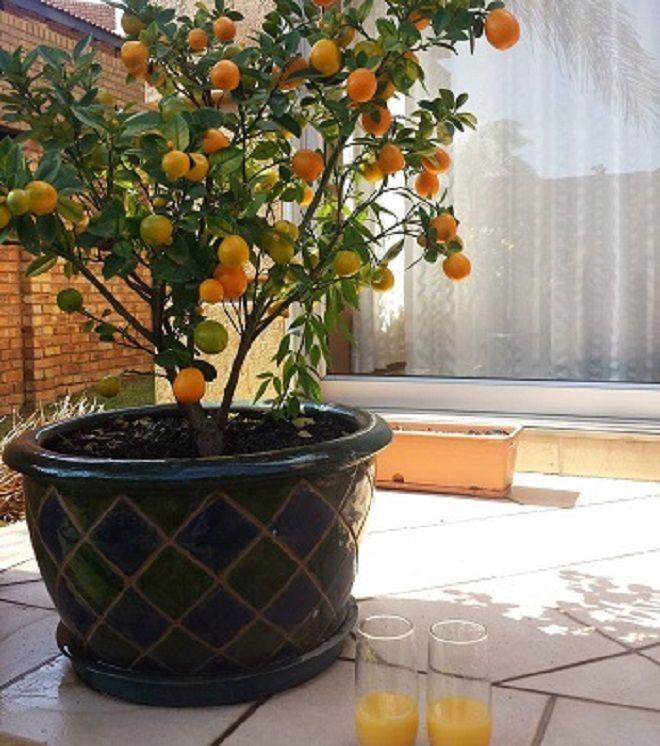 8 fruits que vous pouvez faire pousser tranquillement sans forcément avoir un jardin