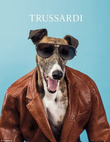 Η καμπάνια του Οίκου Trussardi με τα λαγωνικά, αμέσως κατέκτησε μια θέση στην καρδιά μας, όχι μόνο γιατί είναι  πρωτότυπη, αλλά και γιατί τα πανέξυπνα τετράποδα είναι αξιολάτρευτα! Συμπαθέστατοι πρωταγωνιστές, απλά props και σκηνικά, έγιναν μια από τις πιο ενδιαφέρουσες καμπάνιες της σεζόν φωτογραφημένη από τον William Wegman.