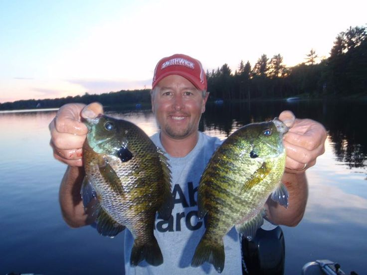 506 best images about freshwater fishing on pinterest for Best bait to catch fish