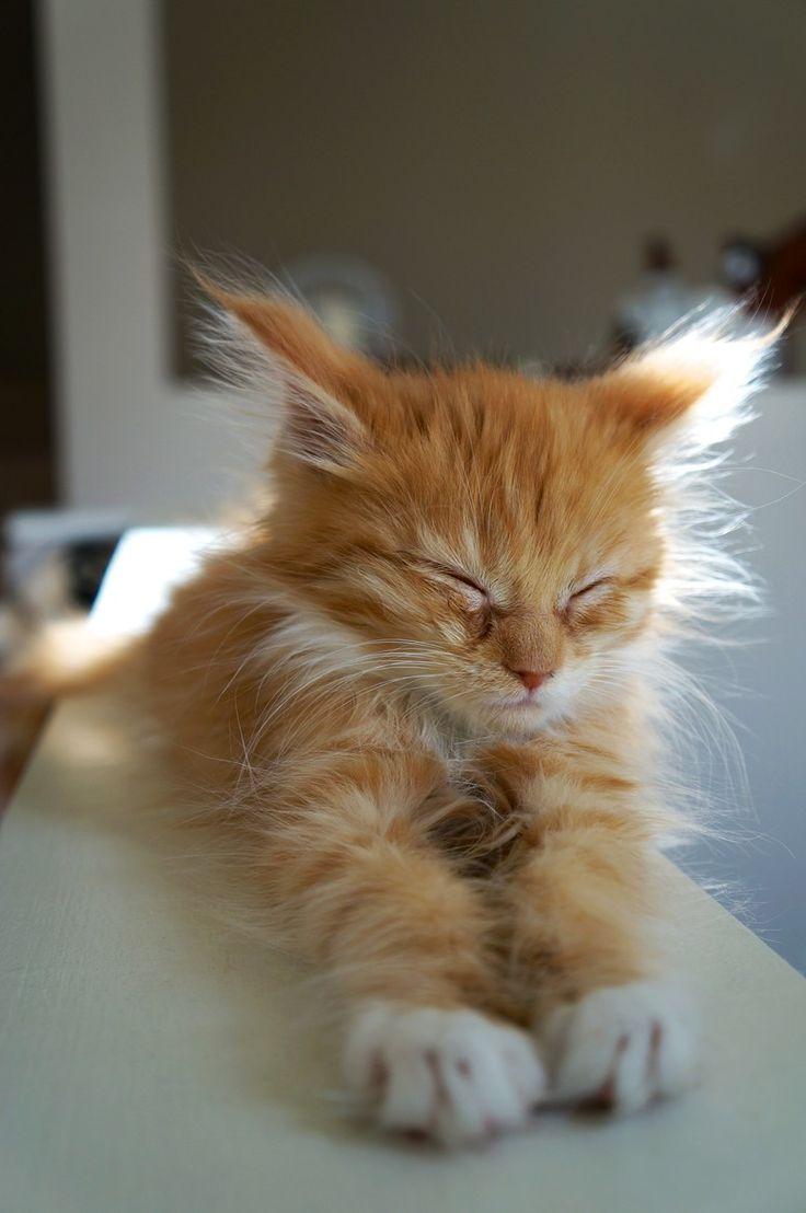 bby meow