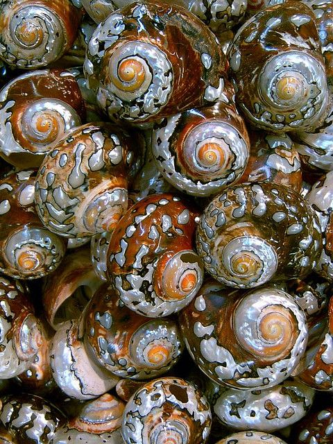 shells, lovely gifts from the sea.: Colors Shells, Natural Spirals Patterns, Colors Mixed, Patterns Beaches Natural, Design Patterns, Colors Schemes, Colors Sea Shells, Sea Photography, Sell Seashells