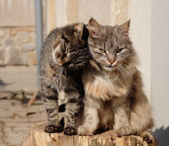 wooden cat condo