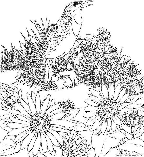 Free Printable Coloring PageKansas State Bird And Flower Western Meadowlark Sunflower Educational Printables