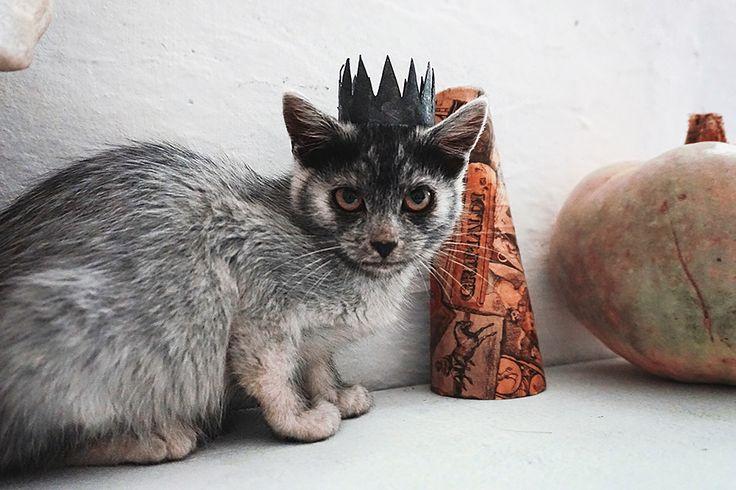 Love this little kid and his little crown 😸🎃🍁  #halloweencat  #photoshoot  #cats  #halloweendecor  #a6000  #autumn  #catsofworld  #karpati  #darkmaskedcats  #kitty