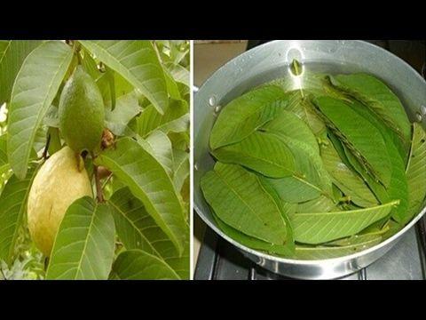 Estas hojas, adelgazan, eliminan ácne, puntos negros, combaten la diabetes, la caída del cabello - YouTube