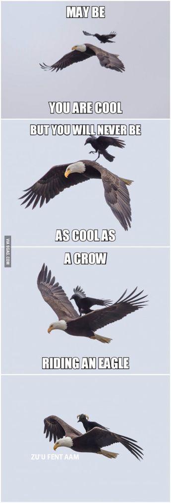 Eine Krähe, die einen Adler reitet