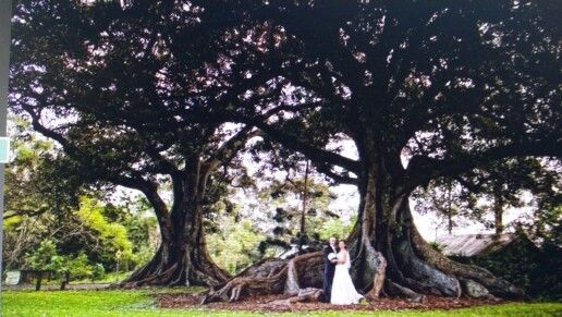 Old Petrie town Lovely wedding pictures at 300 year old trees