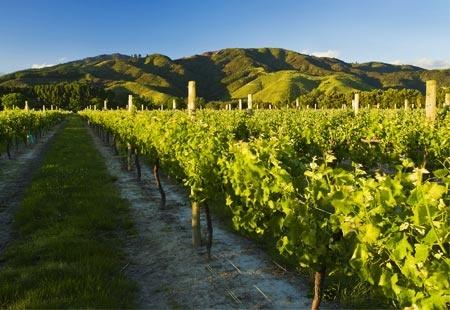 Marlborough, New Zealand-- wine wine wine :)