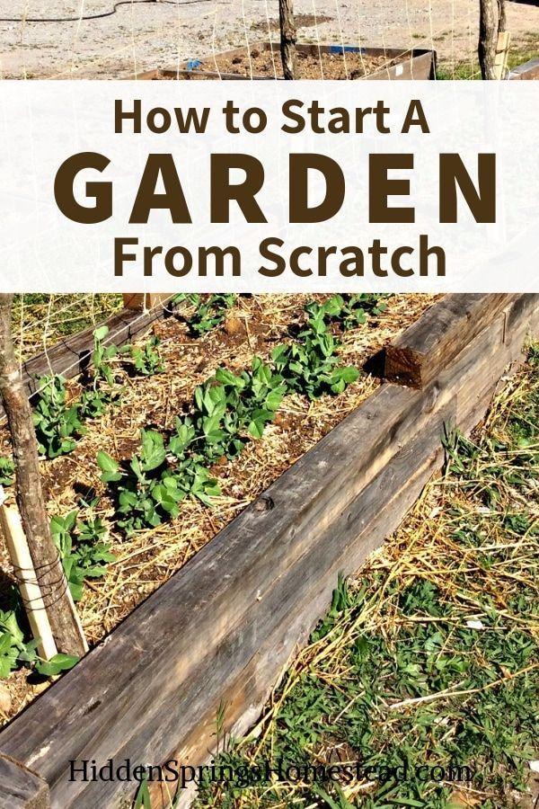 So starten Sie einen Garten von Grund auf Einfache Tipps, wie Sie mit dem Aufbau