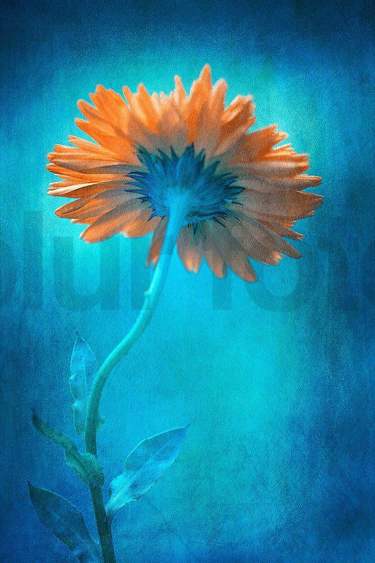 Blue Summer By Clint Hudson