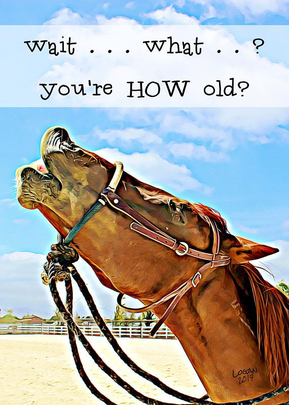 Funny Birthday Card For Friend For Horse Lovers Laughing Horse Funny Horse Card