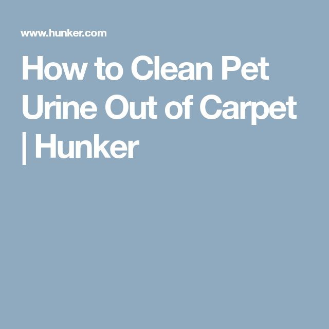 How to Clean Pet Urine Out of Carpet | Hunker