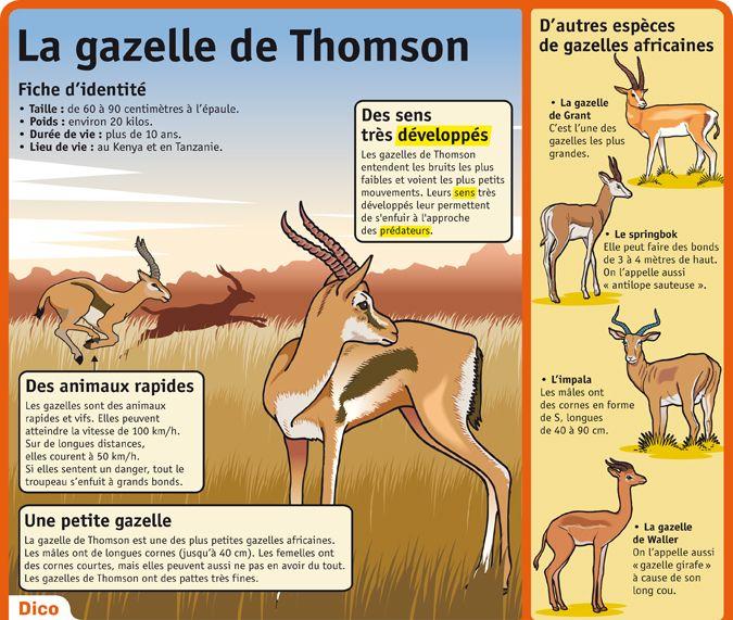 La gazelle de Thomson