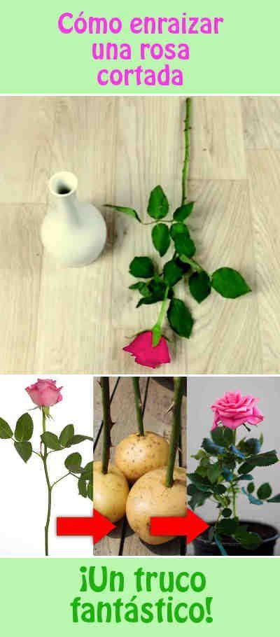 17 mejores ideas sobre terrario cactus en pinterest - Decoracion para terrarios ...
