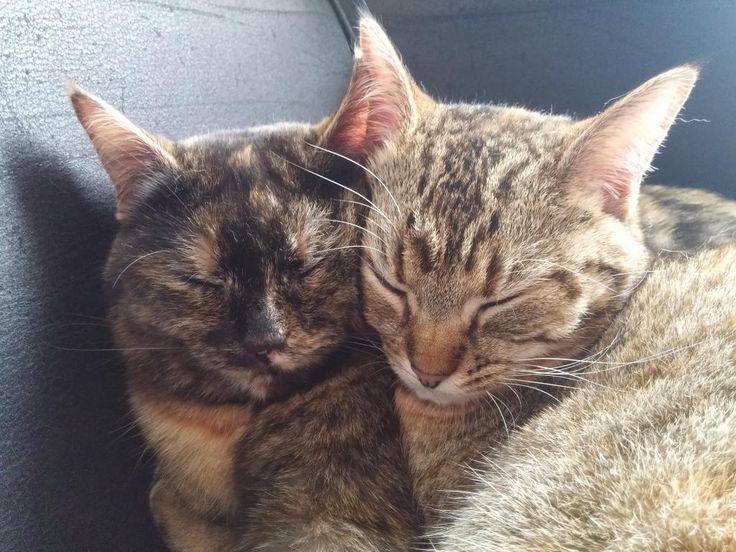 Diese beiden flauschigen Katzen suchen einen Zwischenmieter für ihre Wohnung in Berlin. Interesse? #flauschig