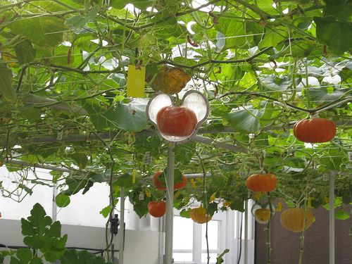 A hanging pumpkin garden! I would never have thought to do this. Definitely a future idea!
