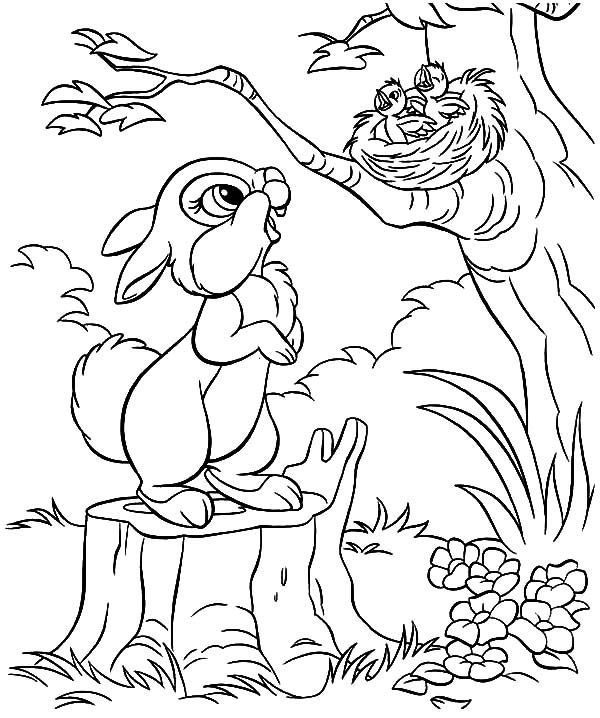 Little Rabbit Saw Bird Nest And Baby Bird Coloring Pages Best Place To Color Bird Coloring Pages Bunny Coloring Pages Coloring Pages