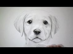 Comment dessiner facilement un chien [Tutoriel]
