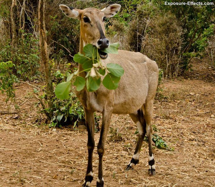Bannerghatta Nature Camp - Jungle Lodges & Resorts - Bangalore, Karnataka