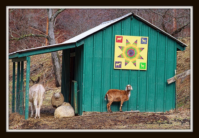 This barn quilt might fit my goat shed well