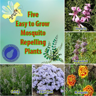 5 Easy to Grow Mosquito Repelling Plants    Repinning this for south Alabama homeowners.