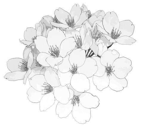 Flower Manga Cap Vagabond Tsukiou: 253 Best B & W Anime Images On Pinterest