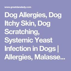 Dog Allergies, Dog Itchy Skin, Dog Scratching, Systemic Yeast Infection in Dogs | Allergies, Malassezia Fungus Candida, yeast overgrowth in dogs, yeast in dogs | GREATDANELADY.COM