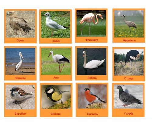 madarak, állatok, stb képek az oldalon