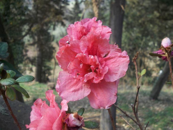 fiori. Montespertoli