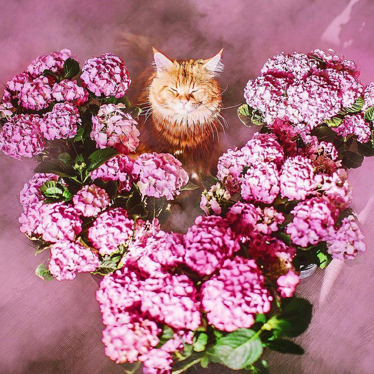 Sanatlı Bi Blog Rus Fotoğrafçı Kristina Makeeva'dan İlham Veren 24 Fotoğraf 3