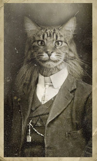 Mr Charlie Brownbutton. Anthropomorphism. Cat in suit, vintage photograph.