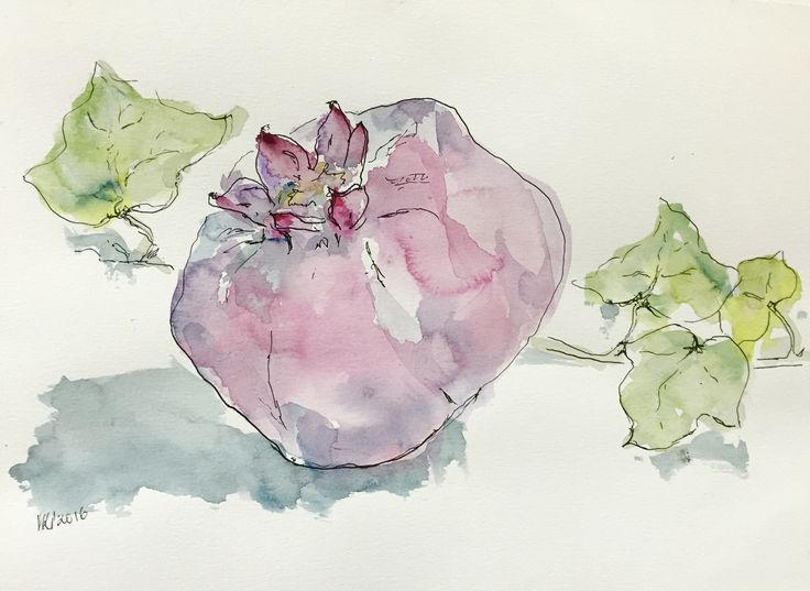 Series of 14 Still Life Washes on 180gsm paper. Pomegranates, Persimmons and Crucifix Orchids. www.atelier451.com.au/gallery