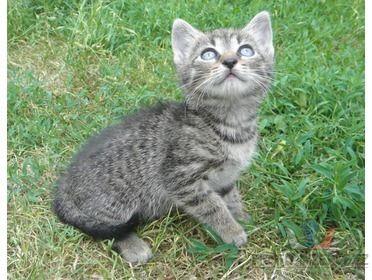Daruji koťata [4h.jpg]