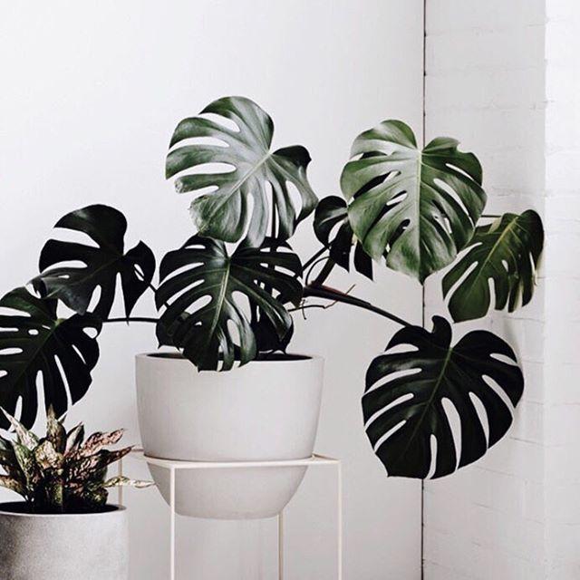 Botanical blogmichaela b o t a n i c a l pinterest plants indoor and flowers - Cool indoor plant ...