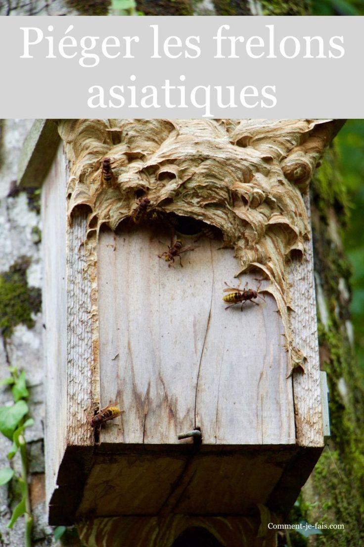 piege a frelon asiatique maison fabrication duun pige frelons ddm jl with piege a frelon. Black Bedroom Furniture Sets. Home Design Ideas