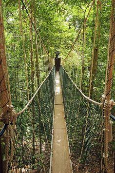 Taman Negara Malaysia Hängebrücke