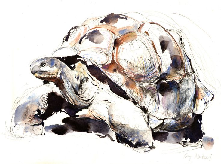 "Lucy Newton; Ink, Mixed Media ""Giant Tortoise"""
