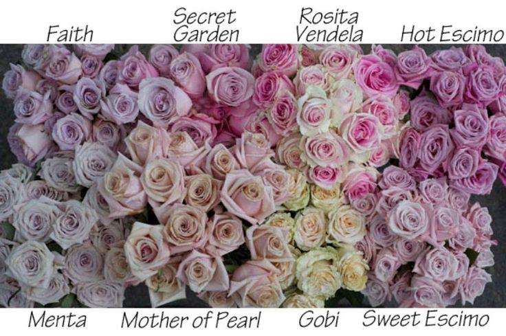 roses - pink, blush, lilac